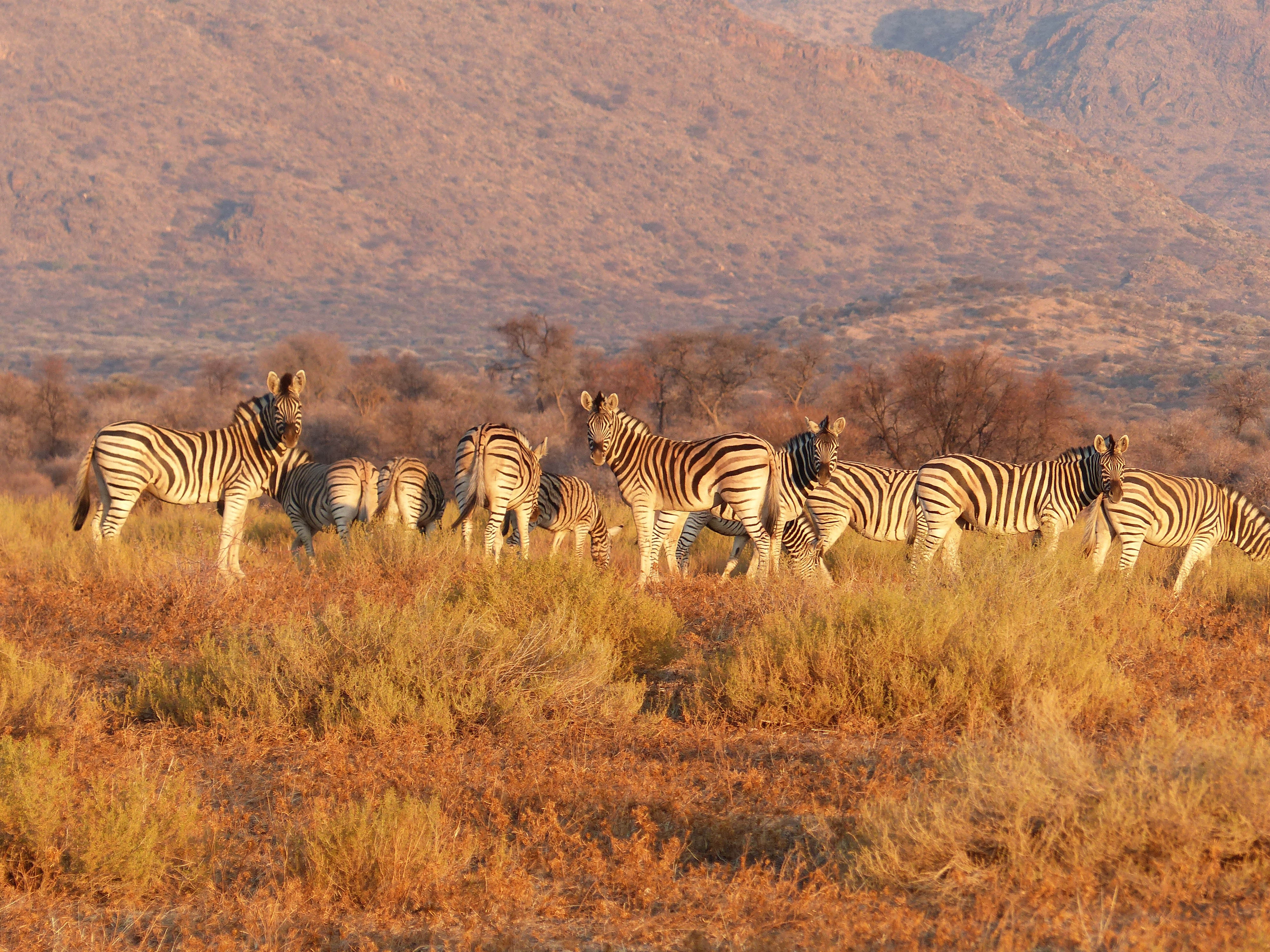La mejor época para viajar a Tanzania