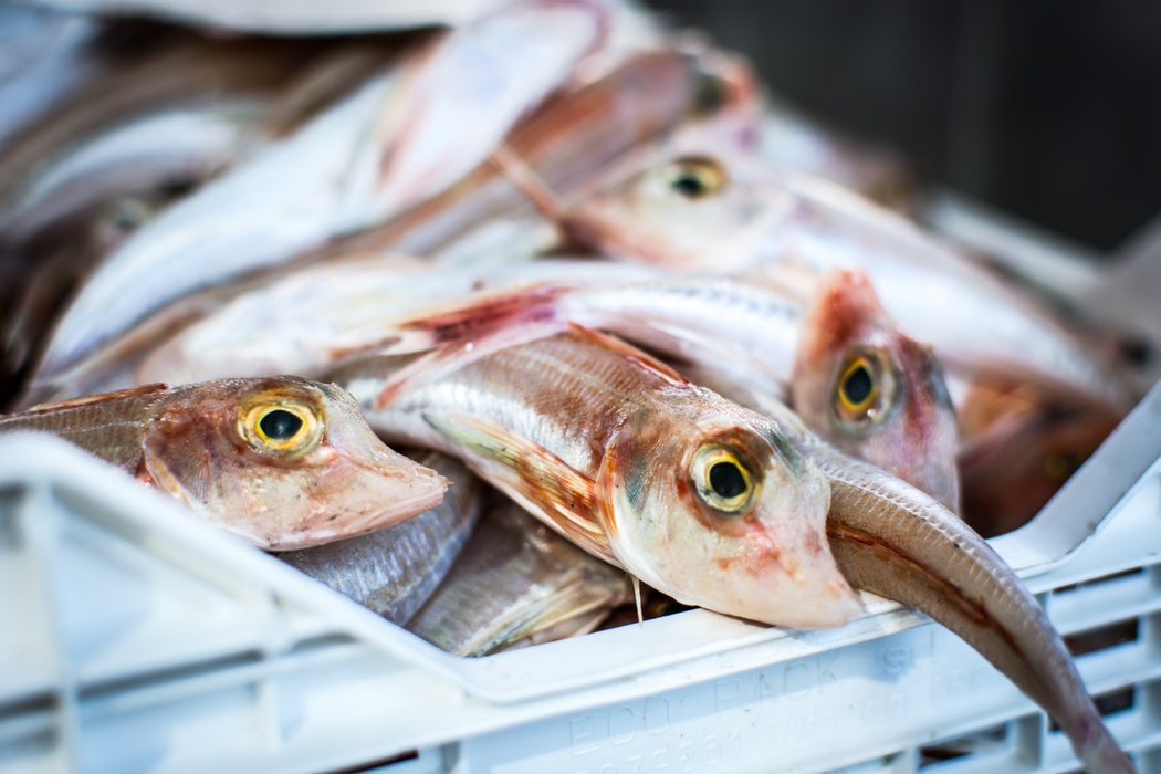 El mercado de pescado más famoso del mundo cierra después de 83 años