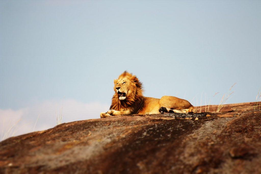 África Oriental Parque Serengeti