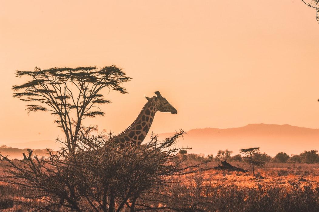 Un viaje por las rutas de exploradores de África Oriental