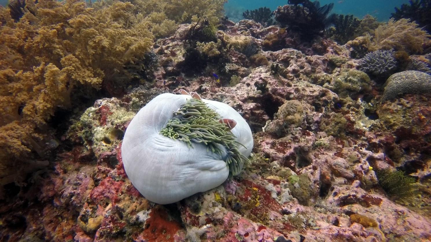 Se prohibirá el turismo en la isla de Komodo, Indonesia