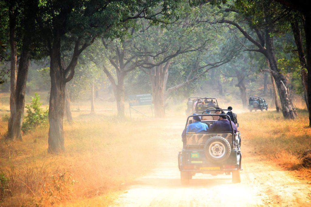 safari en india